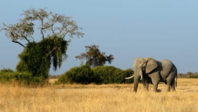 Censimento Elefanti