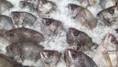 Acquacoltura Italia Pesce