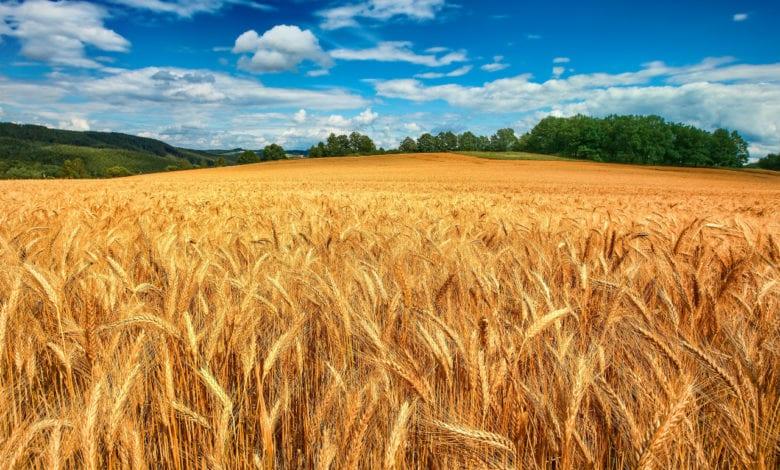 Agricoltura Pesticidi Tracce