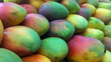 Maschera Mango