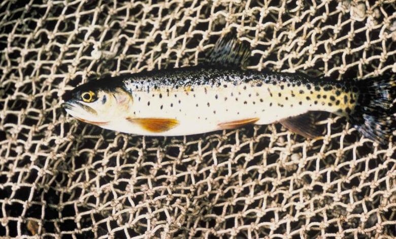 Pesca Strascico