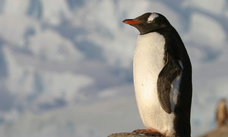 Pinguini Igloo