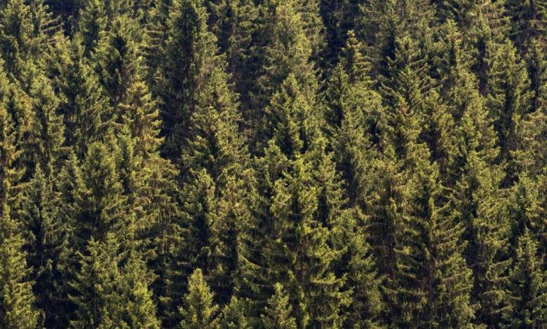 Riforestazione WWF
