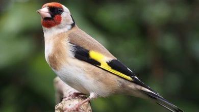 Uccelli Migrazioni