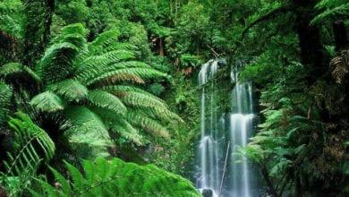 Foreste Tropicali 2020