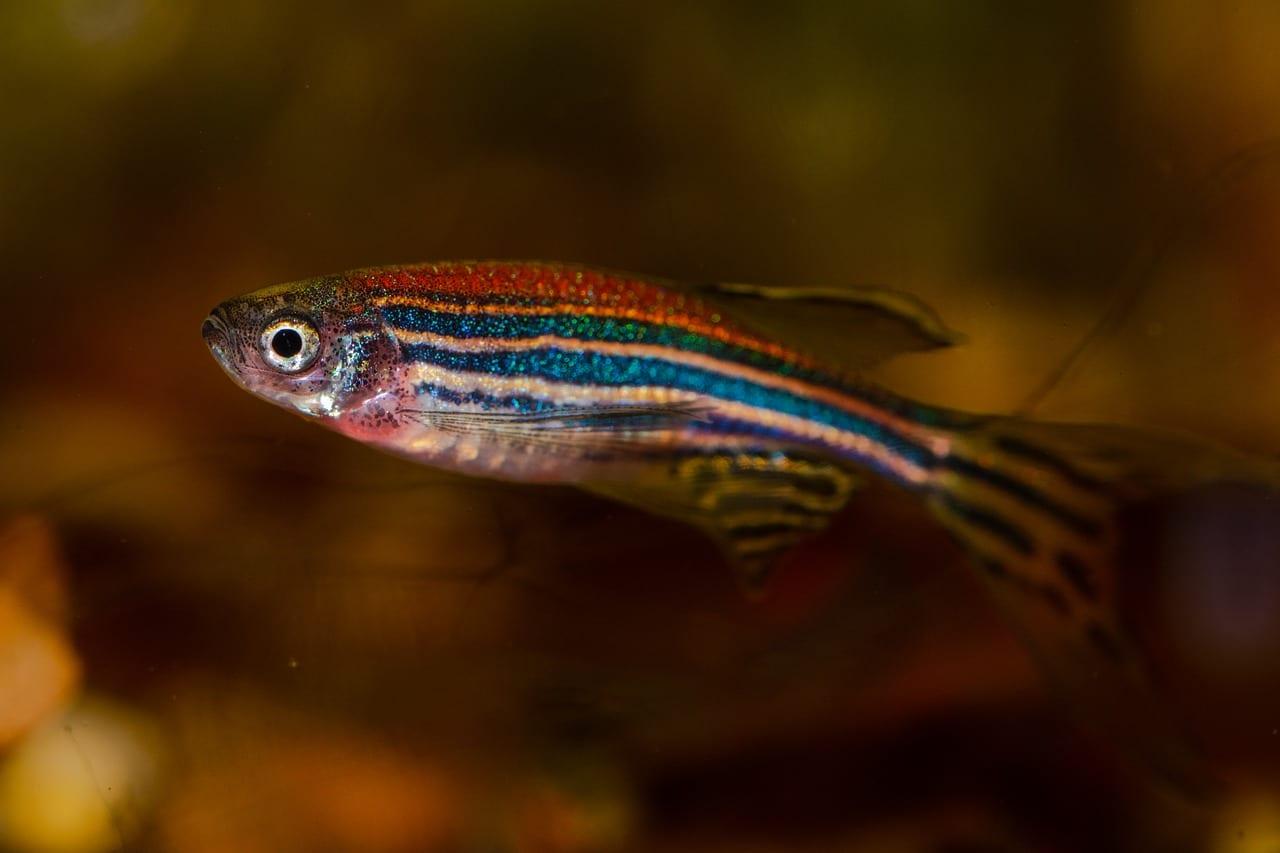 Pesci Evoluzione Riscaldamento