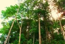 Foresta Amazzonica CO2