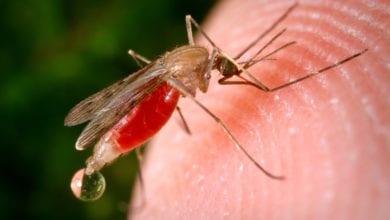 Zanzara Repellenti