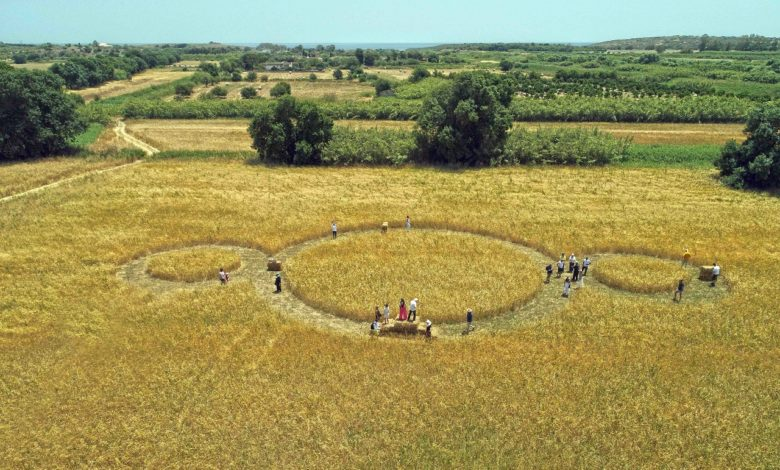AVASIM ricerca agroalimentare antiche sementi