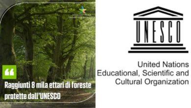 Foresta Patrimonio Unesco